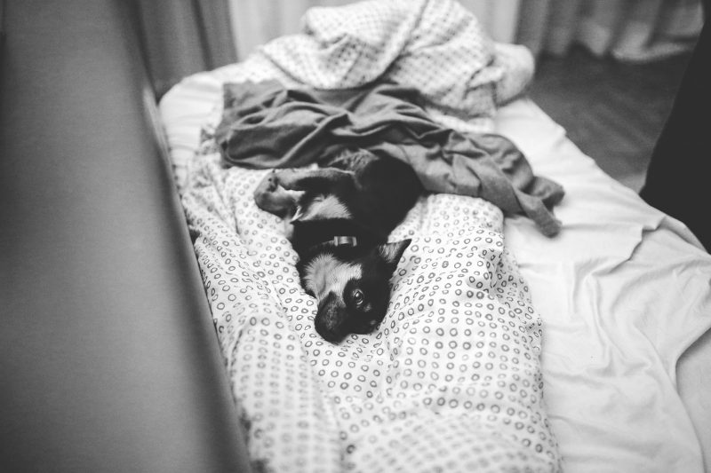 %name bed dog
