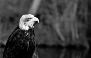 %name eagle