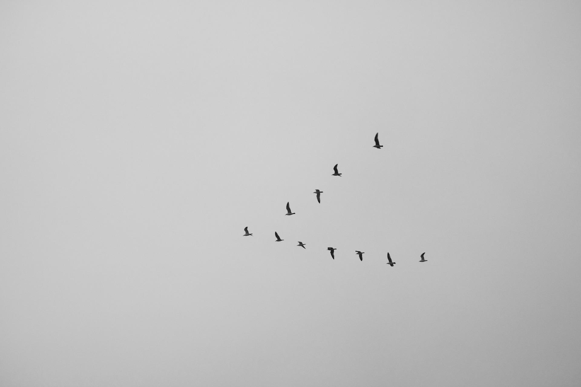 %name bird