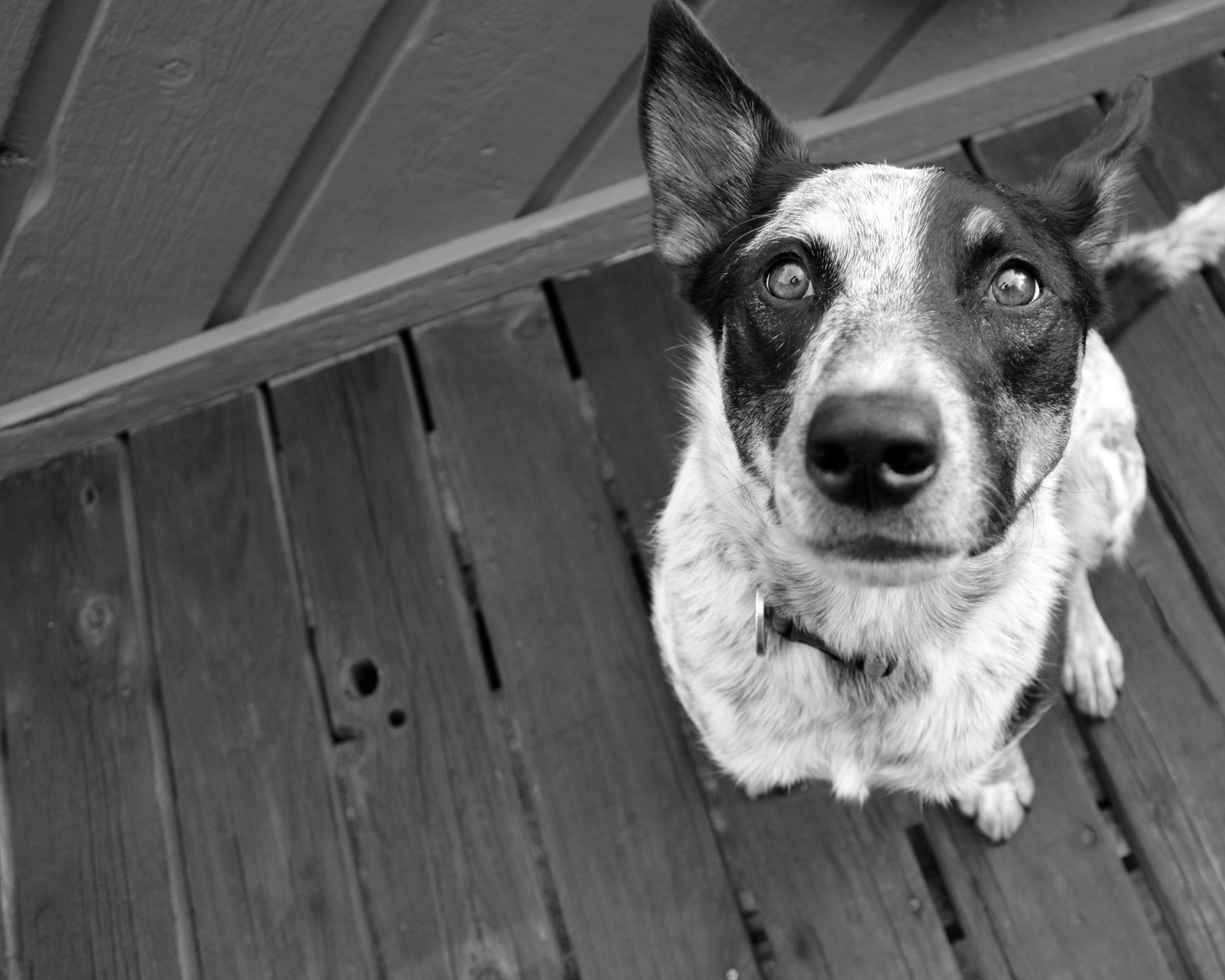 The Dark Dog – run from it or pet it.
